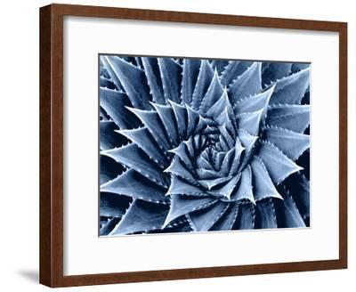 Succulent Indigo I-Mia Jensen-Framed Giclee Print