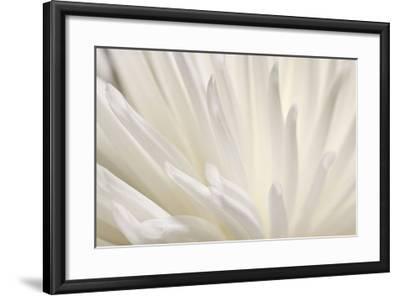 White Flower-PhotoINC Studio-Framed Art Print
