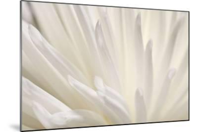 White Flower-PhotoINC Studio-Mounted Art Print