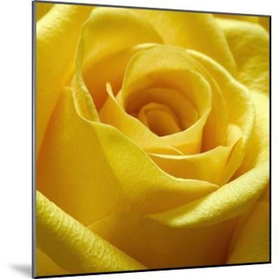 Yellow Rose-PhotoINC Studio-Mounted Art Print