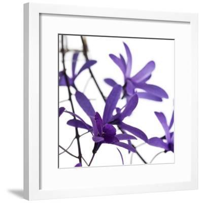 Purple Blossom-PhotoINC Studio-Framed Art Print