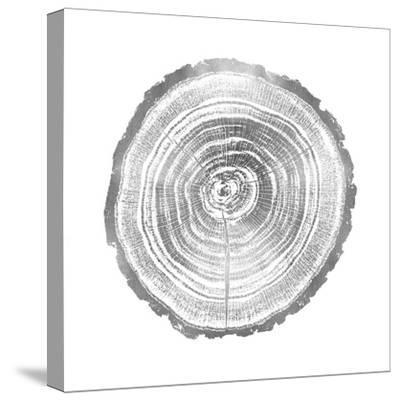 Timber Silver II-Danielle Carson-Stretched Canvas Print