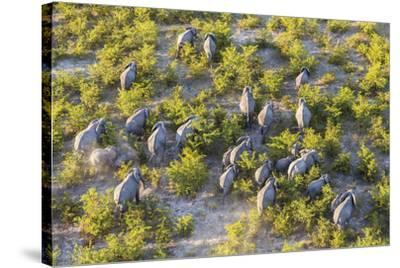 On the Move - Elephants--Stretched Canvas Print