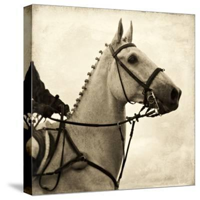 Vintage Equestrian - Counter--Stretched Canvas Print
