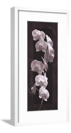 Orchid Opulence I-Katrina Craven-Framed Art Print