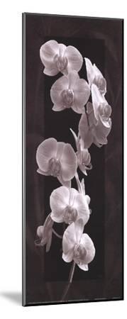 Orchid Opulence I-Katrina Craven-Mounted Art Print