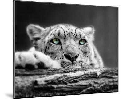 Pop of Color Snow Leopard Eyes-Color Me Happy-Mounted Art Print