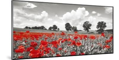 Poppies and vicias in meadow, Mecklenburg Lake District, Germany-Frank Krahmer-Mounted Giclee Print