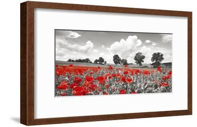 Poppies and vicias in meadow, Mecklenburg Lake District, Germany-Frank Krahmer-Framed Giclee Print