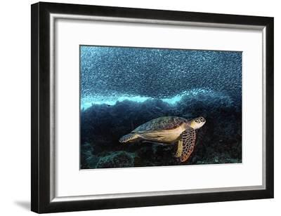 Turtle And Sardines-Henry Jager-Framed Giclee Print