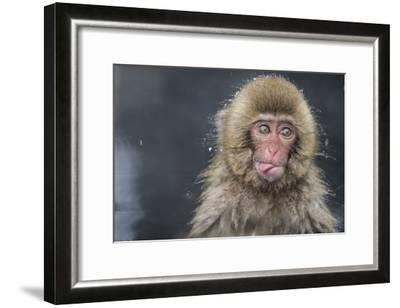 Snow Money, Tongue Out-Takeshi Marumoto-Framed Giclee Print