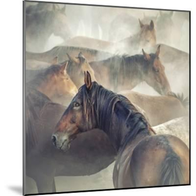 Tired Horses-Huseyin Ta?k?n-Mounted Giclee Print