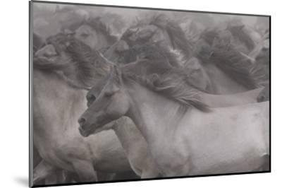 Wildhorses-Dieter Uhlig-Mounted Giclee Print