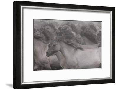 Wildhorses-Dieter Uhlig-Framed Giclee Print