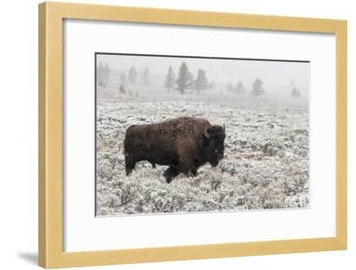 Late Fall Yellowstone-Alfred Forns-Framed Giclee Print