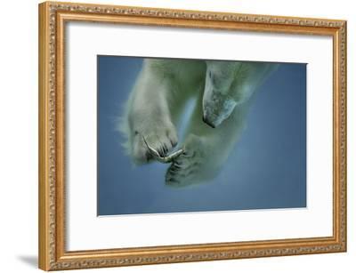 Icebaer-Peter Wagner-Framed Giclee Print