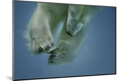 Icebaer-Peter Wagner-Mounted Giclee Print