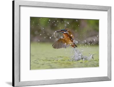 Green Fishing-Marco Redaelli-Framed Giclee Print