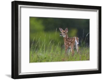 Spring Fawn-Nick Kalathas-Framed Giclee Print