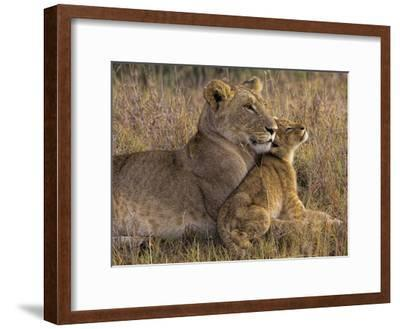 Baby Lion With Mother-Henry Jager-Framed Giclee Print