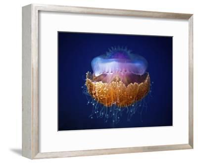 Fried Egg Jellyfish--Framed Giclee Print