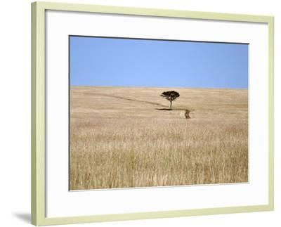 Bucolic Scene I-Golie Miamee-Framed Art Print