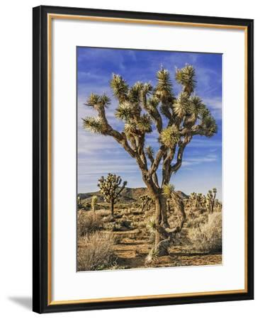 Views of Joshua Tree III-Rachel Perry-Framed Art Print