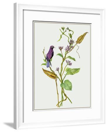 Metaplexis Japonica I-Melissa Wang-Framed Giclee Print