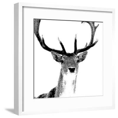 Forest Focus - Deer-Myriam Tebbakha-Framed Giclee Print