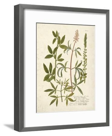 Botanica Agrimonia-The Vintage Collection-Framed Giclee Print
