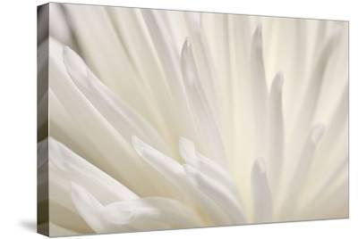 White Flower-PhotoINC Studio-Stretched Canvas Print
