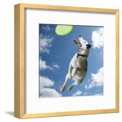 Pup Diva-Noah Bay-Framed Art Print