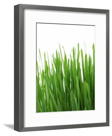 Grass-Grab My Art-Framed Art Print
