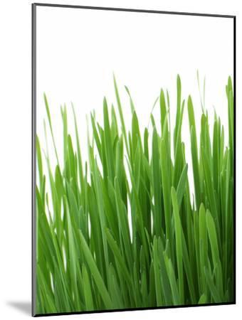 Grass-Grab My Art-Mounted Art Print