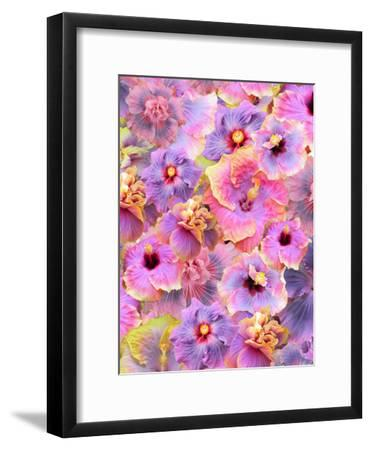Hibiscus Tropical Floral Flowers 2-Grab My Art-Framed Art Print