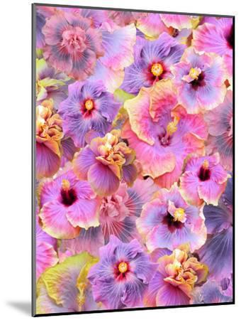Hibiscus Tropical Floral Flowers 2-Grab My Art-Mounted Art Print