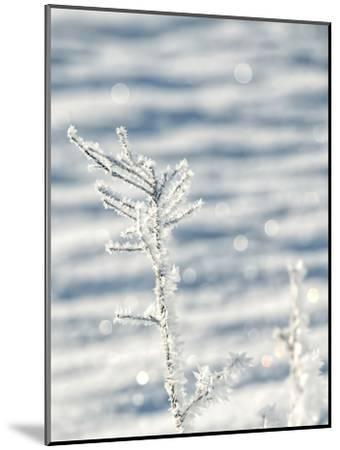 Single Frosty Branch-Grab My Art-Mounted Art Print