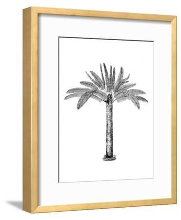 Vintage Palm Tree-Lebens Art-Framed Art Print