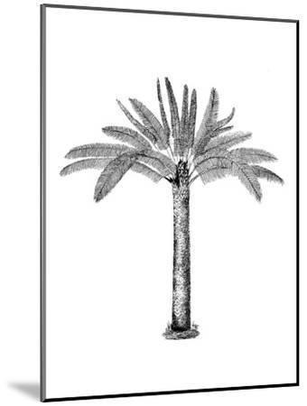 Vintage Palm Tree-Lebens Art-Mounted Art Print