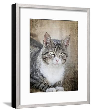 Black Cat 2-Lebens Art-Framed Art Print