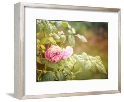 Summer Rose-Lebens Art-Framed Art Print
