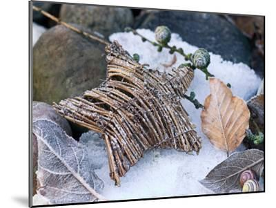 Christmas Nature-Lebens Art-Mounted Art Print