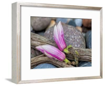 Magnolia-Lebens Art-Framed Art Print