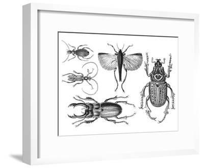 Beetle 2-Lebens Art-Framed Art Print