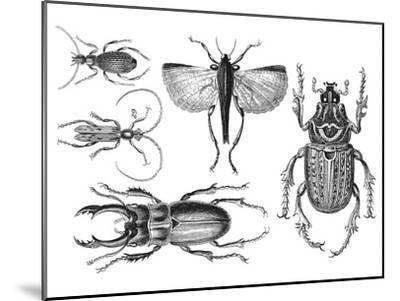 Beetle 2-Lebens Art-Mounted Art Print