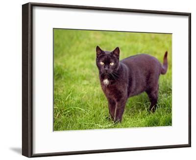 Black Cat-Lebens Art-Framed Art Print