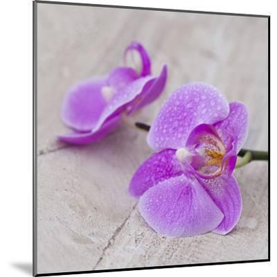 Orchid Pink - Square-Lebens Art-Mounted Art Print