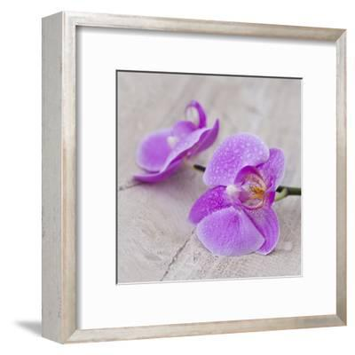 Orchid Pink - Square-Lebens Art-Framed Art Print