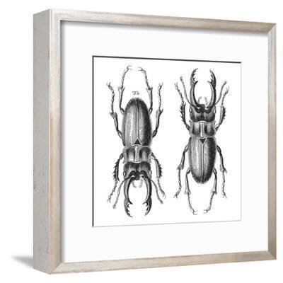 Stag Beetle - Square-Lebens Art-Framed Art Print