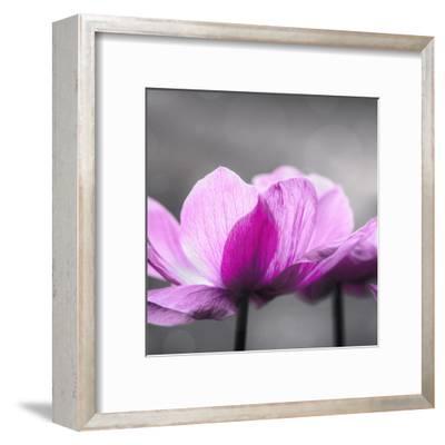 Anemone - Square-Lebens Art-Framed Art Print